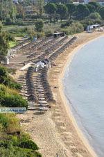 Aghia Paraskevi (Platanias beach) | Skiathos Sporaden | De Griekse Gids foto 6 - Foto van De Griekse Gids
