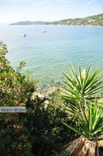Megali Ammos (Ftelia) | Skiathos Sporaden | De Griekse Gids foto 15 - Foto van De Griekse Gids