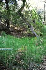 Wandelpaden bij Klooster Kechria | Skiathos Sporaden | De Griekse Gids foto 4 - Foto van De Griekse Gids