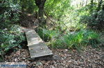 Wandelpaden bij Klooster Kechria | Skiathos Sporaden | De Griekse Gids foto 17 - Foto van De Griekse Gids