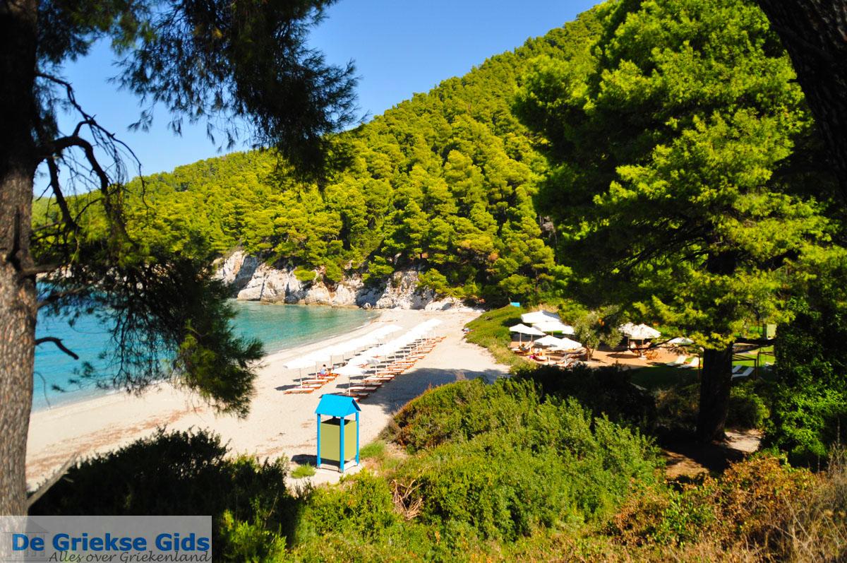 foto Kastani   Skopelos Sporaden   De Griekse Gids foto 8