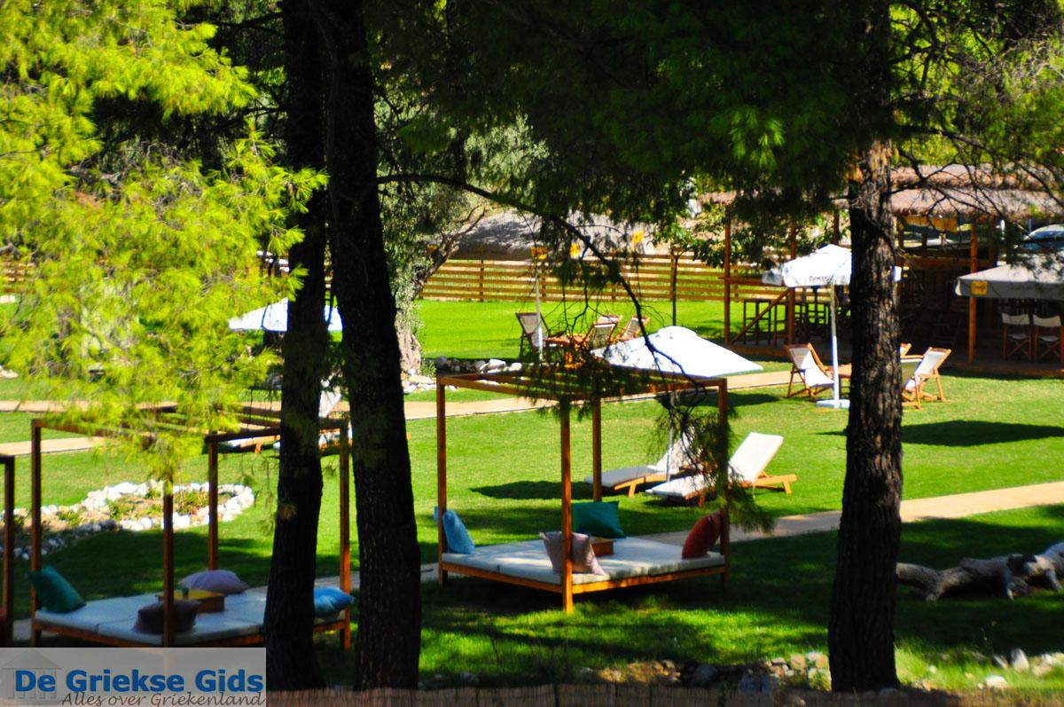foto Kastani | Skopelos Sporaden | De Griekse Gids foto 15