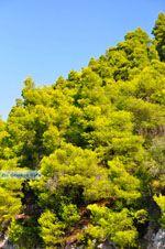 Limnonari bij Agnontas | Skopelos Sporaden | De Griekse Gids foto 9 - Foto van De Griekse Gids