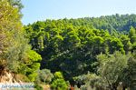 Palio Klima (Oud Klima) | Skopelos Sporaden | De Griekse Gids foto 3 - Foto van De Griekse Gids