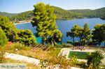 Panormos Skopelos | Sporaden | De Griekse Gids foto 18 - Foto van De Griekse Gids