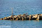 Haven Loutraki Skopelos | Sporaden | De Griekse Gids foto 1 - Foto van De Griekse Gids