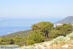 Uitzicht op baai Pefkos | Agios Panteleimon | Skyros foto 4 - Foto van De Griekse Gids
