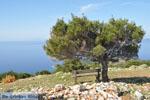JustGreece.com Uitzicht op baai Pefkos | Agios Panteleimon | Skyros foto 9 - Foto van De Griekse Gids