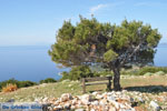 Uitzicht op baai Pefkos | Agios Panteleimon | Skyros foto 9 - Foto van De Griekse Gids