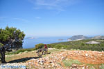 Uitzicht op baai Pefkos | Agios Panteleimon | Skyros foto 10 - Foto van De Griekse Gids