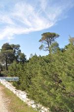 Bossen  bij Agios Panteleimon | Skyros Griekenland foto 1 - Foto van De Griekse Gids