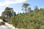 GriechenlandWeb.de Bossen  Agios Panteleimon | Skyros Griechenland foto 2 - Foto GriechenlandWeb.de