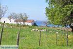 Bij Aghios Fokas | Skyros Griekenland foto 6 - Foto van De Griekse Gids
