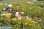 Bij Aghios Fokas | Skyros Griekenland foto 9 - Foto van De Griekse Gids