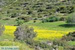 Bij Aghios Fokas | Skyros Griekenland foto 22 - Foto van De Griekse Gids