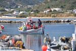 Haventje bij Magazia | Skyros Griekenland foto 3 - Foto van De Griekse Gids