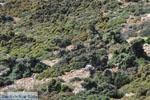 Vanaf Kalamitsa naar Vouno | Het zuiden van Skyros foto 1 - Foto van De Griekse Gids