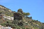 Vanaf Kalamitsa naar Vouno | Het zuiden van Skyros foto 4 - Foto van De Griekse Gids