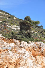 GriechenlandWeb.de Vanaf Kalamitsa naar Vouno | Het zuiden van Skyros foto 5 - Foto GriechenlandWeb.de