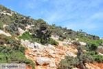 GriechenlandWeb.de Vanaf Kalamitsa naar Vouno | Het zuiden van Skyros foto 6 - Foto GriechenlandWeb.de