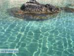 GriechenlandWeb Heldere zee | Skyros Griechenland - Foto Kyriakos Antonopoulos