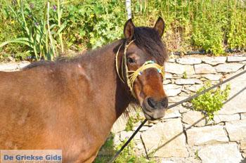 Paard in Aspous | Skyros Griekenland - Foto van https://www.grieksegids.nl/fotos/skyros/normaal/skyros-grieksegids-015.jpg