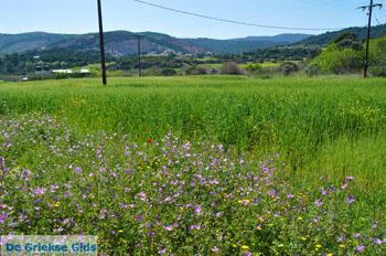 Bloemen op Skyros | Skyros Griekenland foto12 - Foto van https://www.grieksegids.nl/fotos/skyros/normaal/skyros-grieksegids-096.jpg