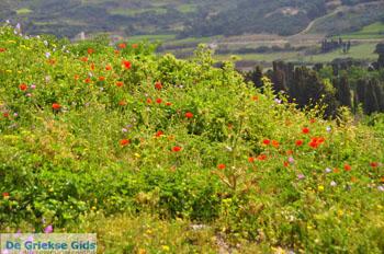 Bloemen op Skyros bij Agios Dimitrios Skyros - Foto van https://www.grieksegids.nl/fotos/skyros/normaal/skyros-grieksegids-234.jpg