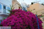 Ano Syros | Griekenland | De Griekse Gids foto 40 - Foto van De Griekse Gids