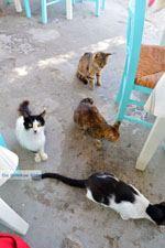 Kini | Syros | Griekenland foto 40 - Foto van De Griekse Gids