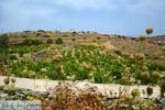 Sa Michalis | Noord Syros | Griekenland foto 43 - Foto van De Griekse Gids