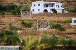 Karkados en Kalloni Tinos | Griekenland | Foto 9 - Foto van De Griekse Gids