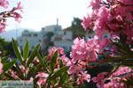 Agapi Tinos | Griekenland | De Griekse Gids foto 28 - Foto van De Griekse Gids