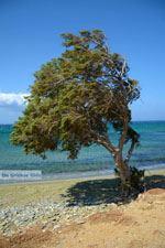 Badplaats Aghios Fokas ten oosten van Tinos stad | Foto 14 - Foto van De Griekse Gids