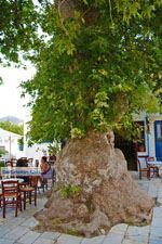 Pyrgos Tinos | Griekenland | Fotto 27 - Foto van De Griekse Gids