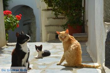 Falatados bij Exomvourgo Tinos   Griekenland   Foto 25 - Foto van De Griekse Gids