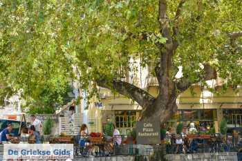 Delphi Fokida | Centraal Griekenland | Stadje Delphi restaurant - Foto van De Griekse Gids