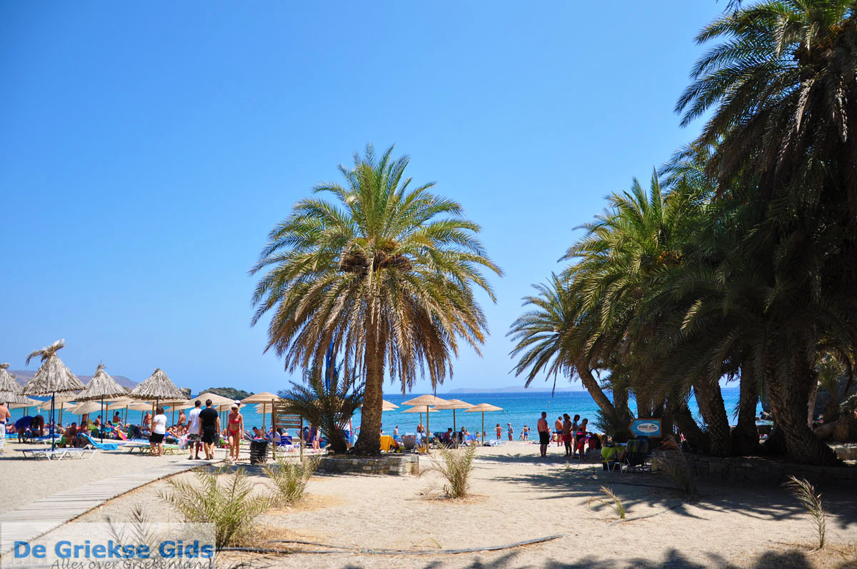 foto Vai Kreta | Lassithi Kreta | De Griekse Gids foto 57