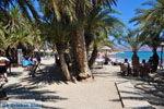 Vai Kreta | Lassithi Kreta | De Griekse Gids foto 5 - Foto van De Griekse Gids