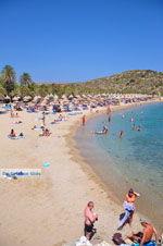GriechenlandWeb Vai Kreta | Lassithi Kreta | GriechenlandWeb.de foto 9 - Foto GriechenlandWeb.de