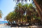 Vai Kreta | Lassithi Kreta | De Griekse Gids foto 56 - Foto van De Griekse Gids