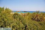 Vai Kreta | Lassithi Kreta | De Griekse Gids foto 63 - Foto van De Griekse Gids