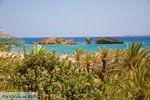 Vai Kreta | Lassithi Kreta | De Griekse Gids foto 64 - Foto van De Griekse Gids
