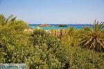 Vai Kreta | Lassithi Kreta | De Griekse Gids foto 65 - Foto van De Griekse Gids