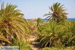Vai Kreta | Lassithi Kreta | De Griekse Gids foto 66 - Foto van De Griekse Gids
