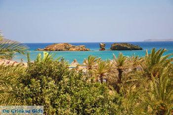 Vai Kreta | Lassithi Kreta | GriechenlandWeb.de foto 64 - Foto von GriechenlandWeb.de