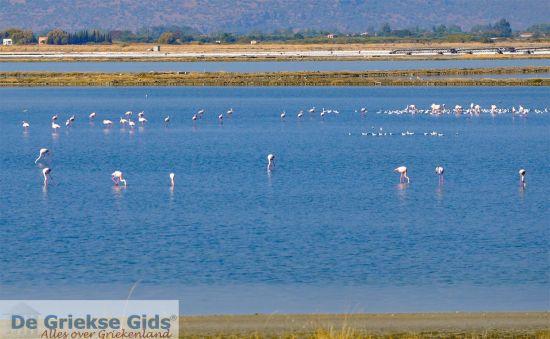 Flamingo's op Lesbos - vogel paradijs