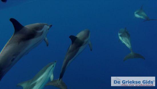 Dolfijnen bij Zakynthos
