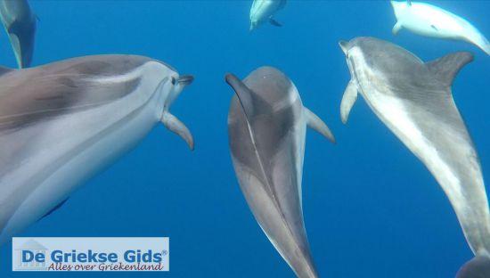 Dolfijnen Zakynthos