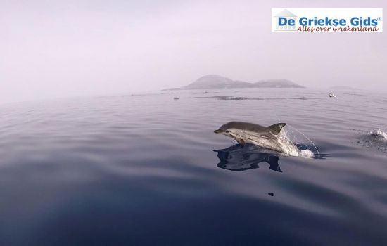 Dolfijnen bij Zakynthos in Griekenland
